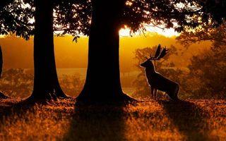 Фото бесплатно вечер, олень, рога