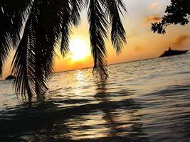 Обои берег, пальмы, листья, море, яхты, небо, закат