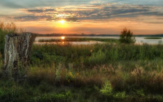Фото бесплатно пень, сухой, трава