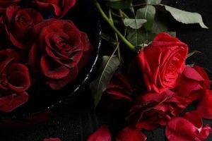 Бесплатные фото розы,цветы,флора,чёрный фон