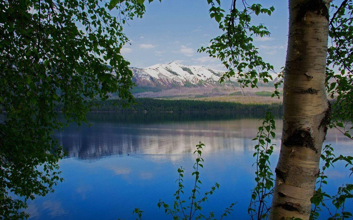 Фото бесплатно деревья, ветви, листва, река, горы, вершины, снег - на рабочий стол