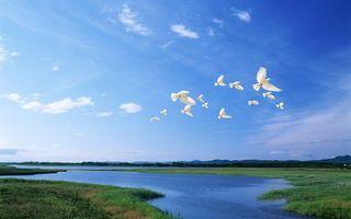 Бесплатные фото голуби,белые,полет,крылья,трава,озера,небо