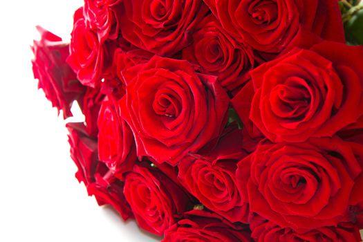 Фото бесплатно розы, цветы, красные лепестки
