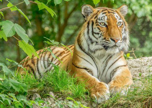 Бесплатные фото тигр,хищник,животное