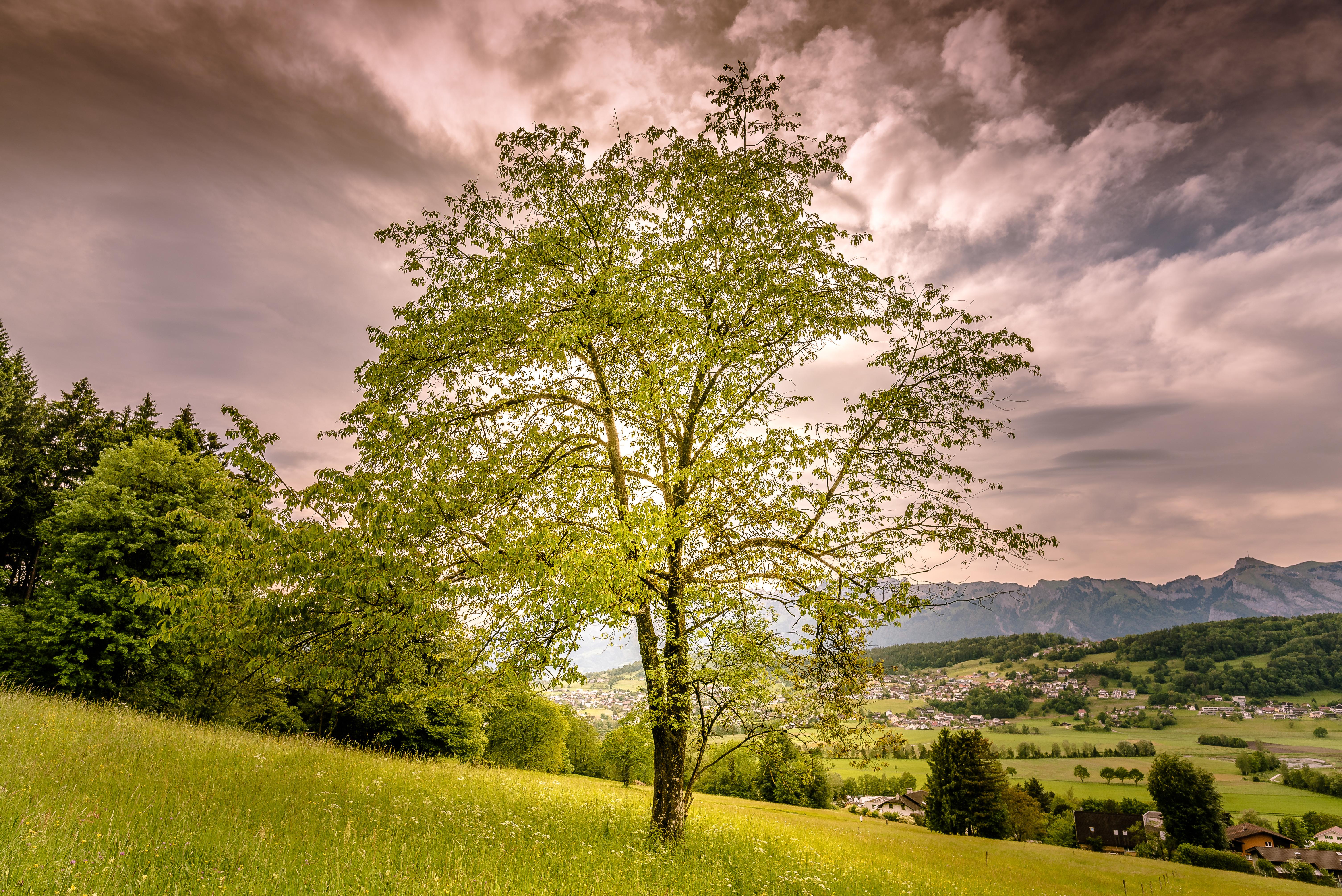 обои закат, горы, холмы, деревья картинки фото