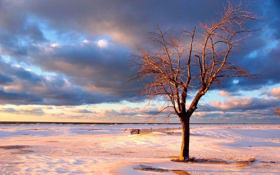 Фото бесплатно зима, равнина, дерево, снег, заборы, небо, облака