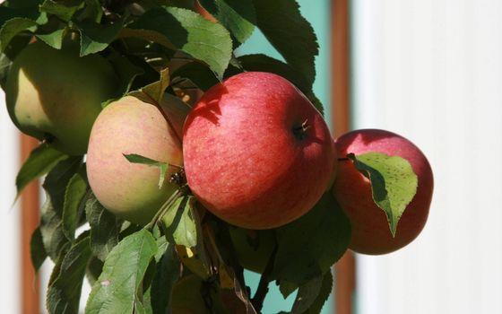 Заставки фрукты, яблоки, листья