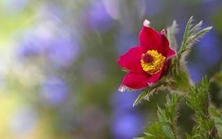 Фото бесплатно лепестки, бордовые, пестики