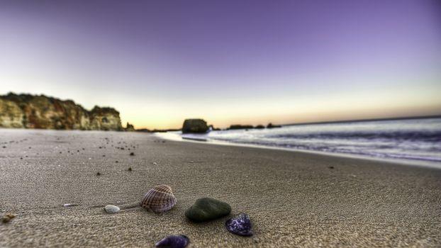 Бесплатные фото ракушки,берег,пляж,песок
