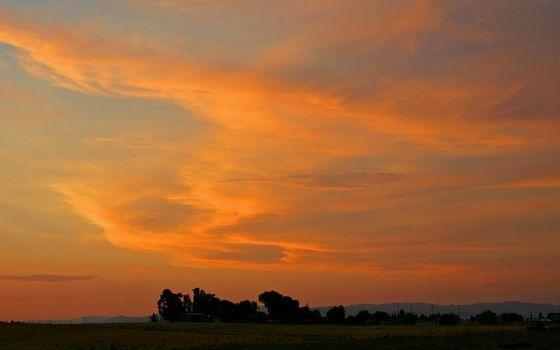 Фото бесплатно вечер, сумерки, деревья