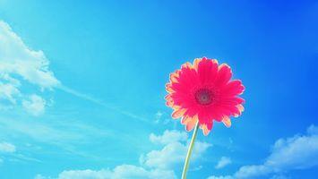 Бесплатные фото лепестки,розовые,стебель,зеленый,небо,облака