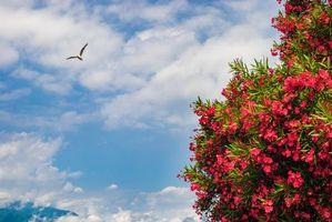 Бесплатные фото небо,облака,ветки,цветы,азалия,чайка,природа