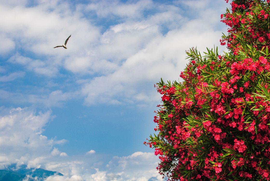 Обои небо, облака, ветки, цветы, азалия, чайка, природа на телефон | картинки природа