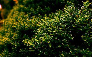 Бесплатные фото сад,растение,кустарник,ветви,листья,зеленые
