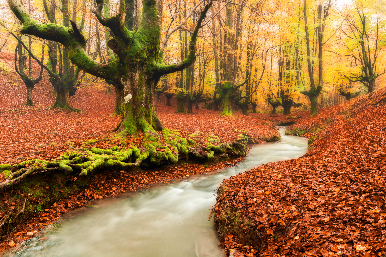 обои осень, лес, парк, деревья картинки фото