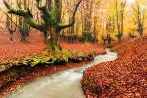 Бесплатные фото осень,лес,парк,деревья,речка,ручей,природа