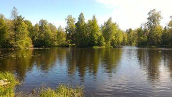Фото бесплатно деревья, ручей, река