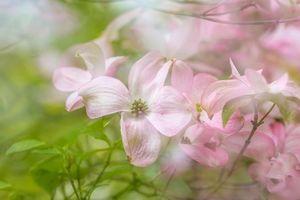 Заставки цветок, цветы, макро