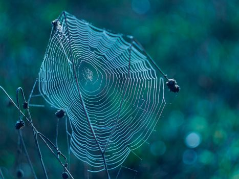Photo free web, plant, macro
