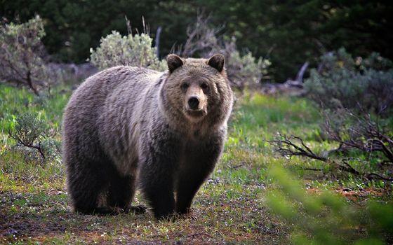 Бесплатные фото медведь,большой,природа,животные