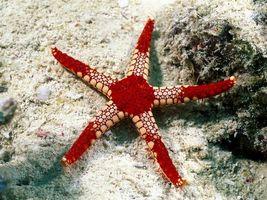 Бесплатные фото морская звезда,море,звездочка,на дне,подводный мир