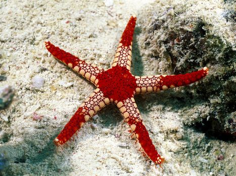 Photo free starfish, sea, asterisk