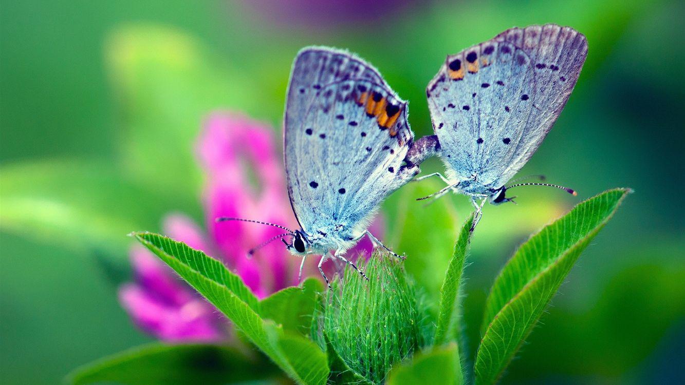 Фото бесплатно бабочки, крылья, раскраска - на рабочий стол