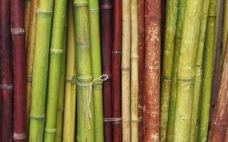 Фото бесплатно бамбук, стволы, растение, заставка, обои, зеленый, белый, красный, природа