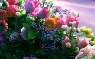 Заставки бутоны,лепестки,листья,стебли,цветки,букет,цветы