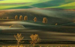 Photo free field, grass, trees