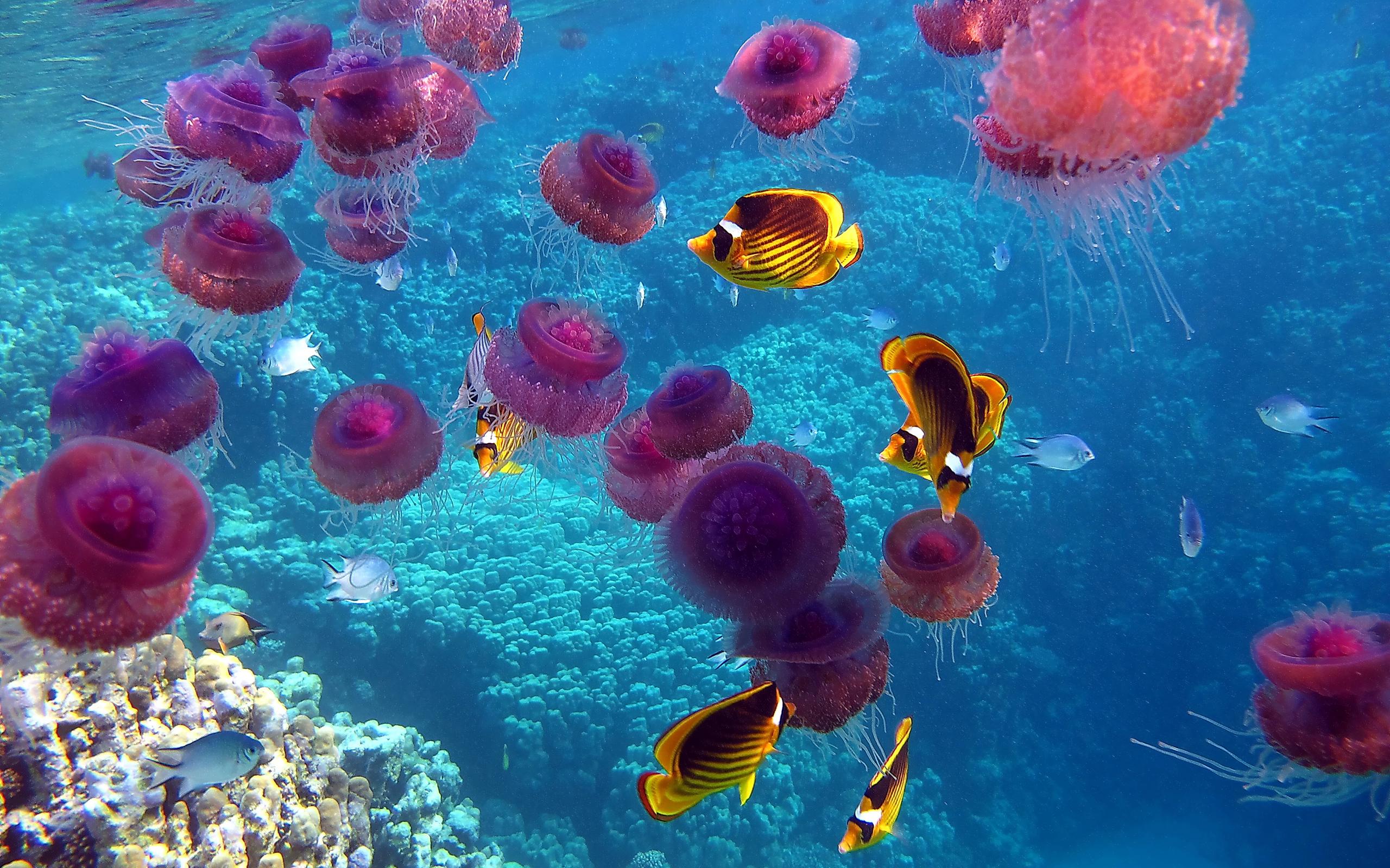 рыбы, медузы, океан