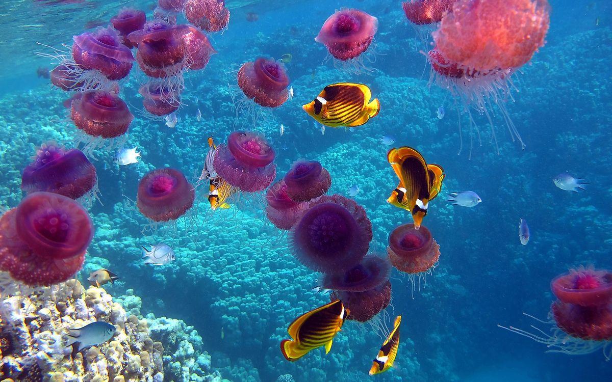 Фото бесплатно рыбы, медузы, океан, подводный мир, подводный мир