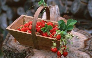Бесплатные фото клубника,корзина,пень,листья,ветка,урожай,цветок