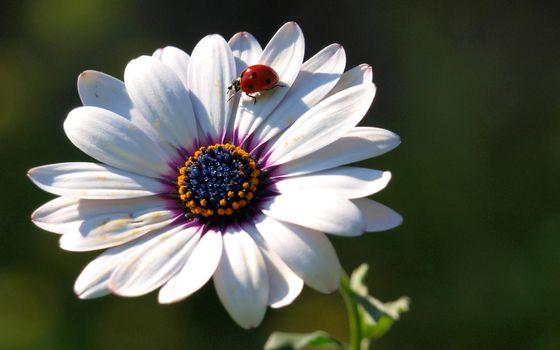 Бесплатные фото лепестки,белые,стебель,зеленый,божья,коровка,цветы