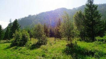 Бесплатные фото лес,деревья,листья,небо,облака,трава,лужайка