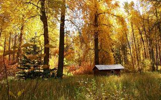 Бесплатные фото лес,домик,деревья,кусты,трава,листья,осень