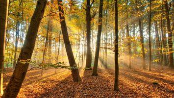 Бесплатные фото осень,лес,деревья,листья,лучи,свет,солнце