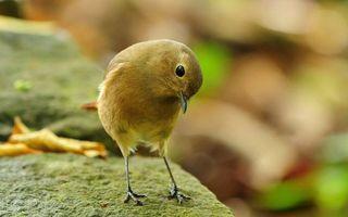Фото бесплатно птица, лапки, когти