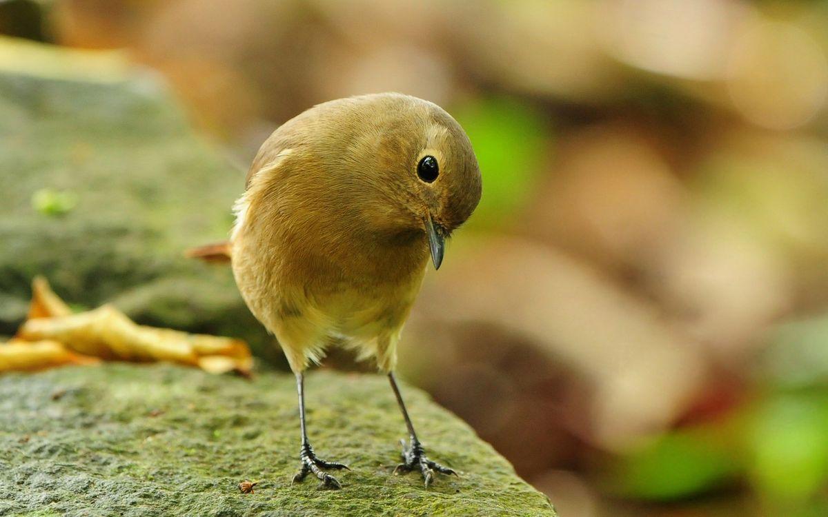 Фото бесплатно птица, лапки, когти, клюв, взгляд, перья, пух, мох, камень, лес, листья, глаза, птицы, природа, ситуации, ситуации