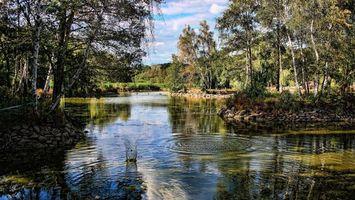 Бесплатные фото река,пруд,вода,капли,волны,деревья,стволы
