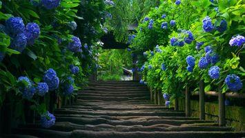 Фото бесплатно сад, кусты, цветки