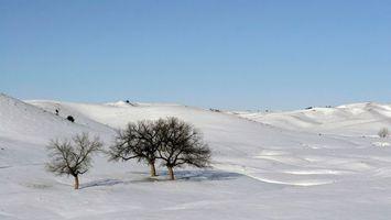 Фото бесплатно снег, дерево, холм