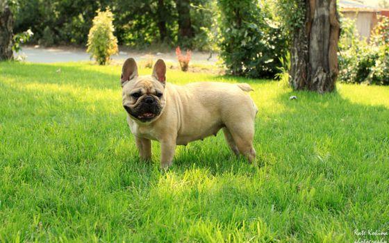 Фото бесплатно сука, стоит, трава