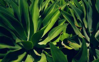 Бесплатные фото трава,зеленая,цветок,листья,ветки,клумба,поле