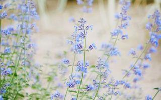 Бесплатные фото цветки,поле,трава,голубой,цвет,клумба,лето