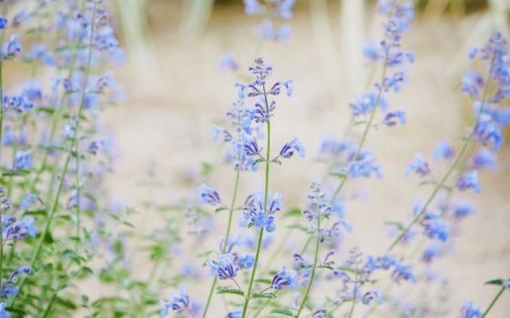 Фото бесплатно цветки, поле, трава