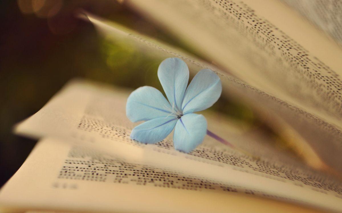 Фото бесплатно цветок, лепестки, блики, страницы, бумага, стебель, разное, разное