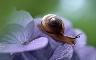 Бесплатные фото улитка,раковина,рожки,глаза,панцирь,цветок,синий