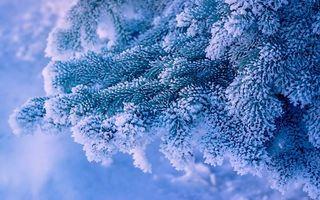 Photo free branch, fir, spruce