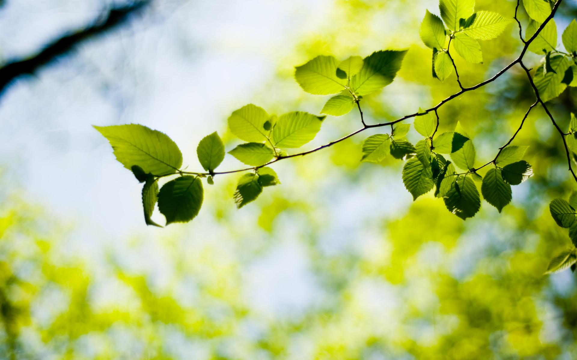 листья зелень фокус  № 1341647 без смс